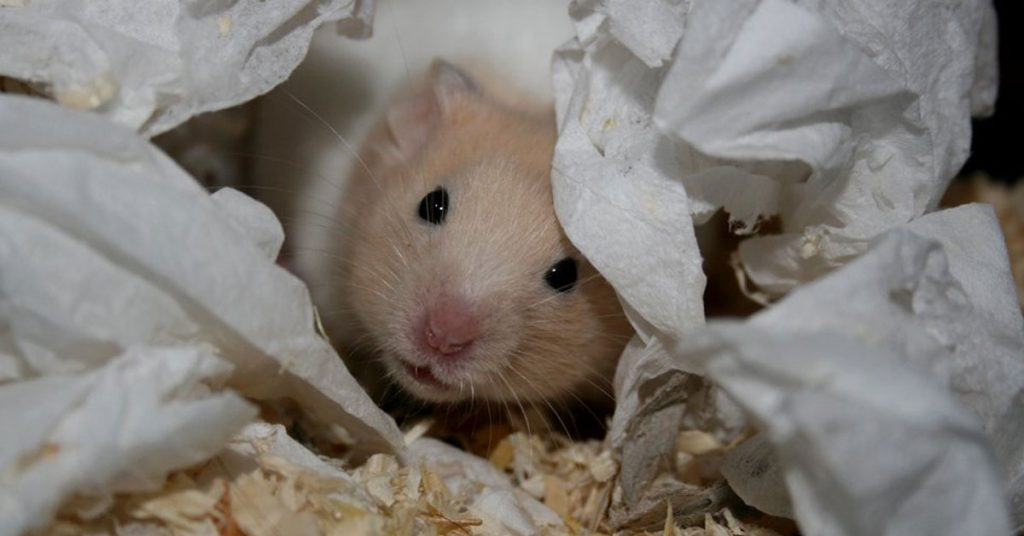10+ Reasons You Should Not Get a Hamster
