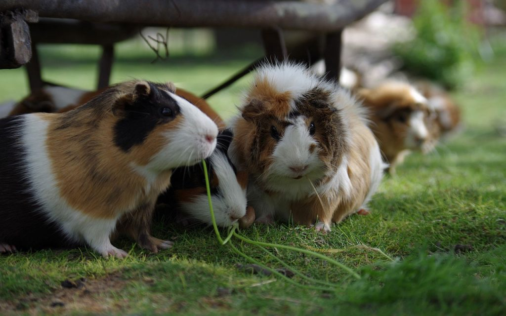 5 Creative Ways to Tell Your Hamsters Apart