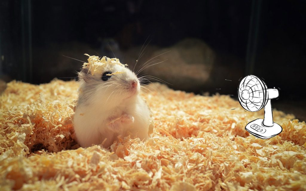 9 Best Ways to Keep Hamsters Cool