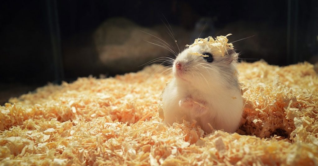 How Often Should You Change Hamster Bedding?