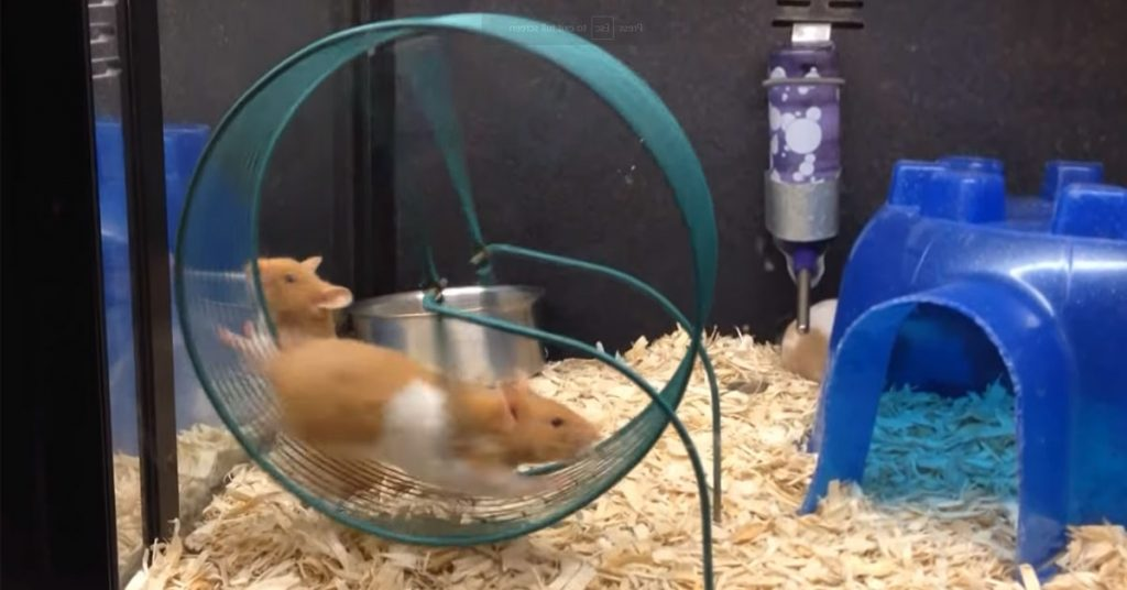 Should You Take Your Hamster Wheel Out at Night?