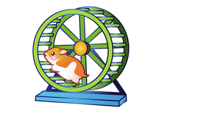 These Are The Best Ways to Exercise a Hamster